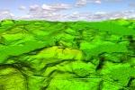 Krajobraz wczesnośredniowiecznego osadnictwa Prus. Ekologia kompleksu osadniczego w Poganowie stanowisko IV